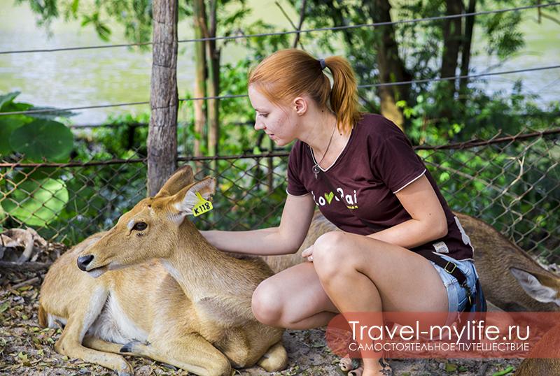 Ника гладит олененка в зоопарке Кхао-Кхео в Паттайе. Это наш любимый зоопарк, где практически всех животных можно трогать и кормить.