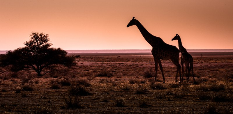 Лайфхак Африка