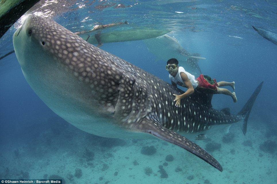 man and shark