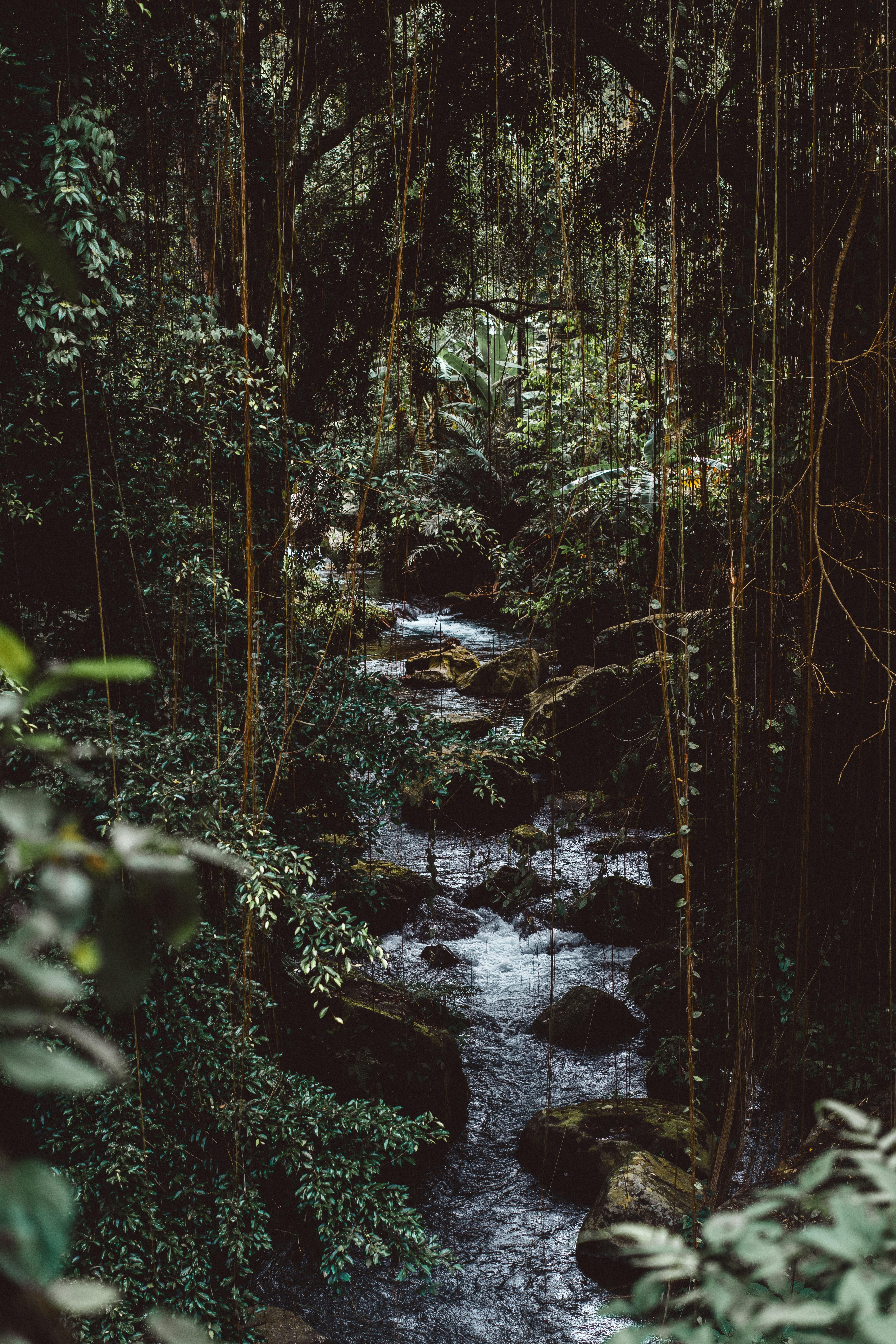 kuta_jungle
