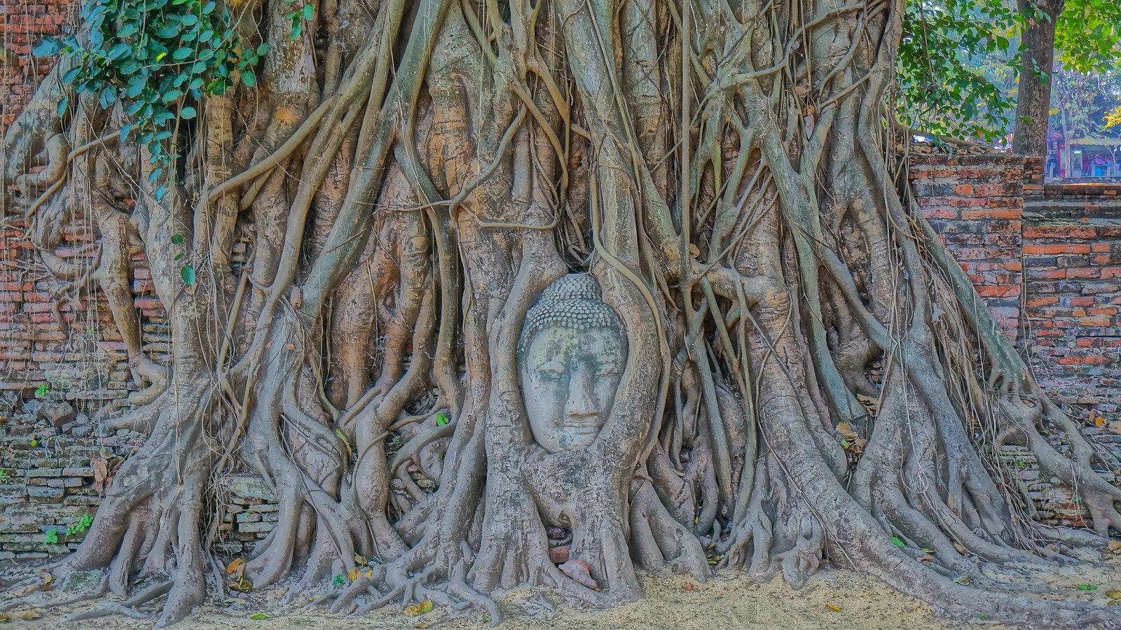 head-of-buddha