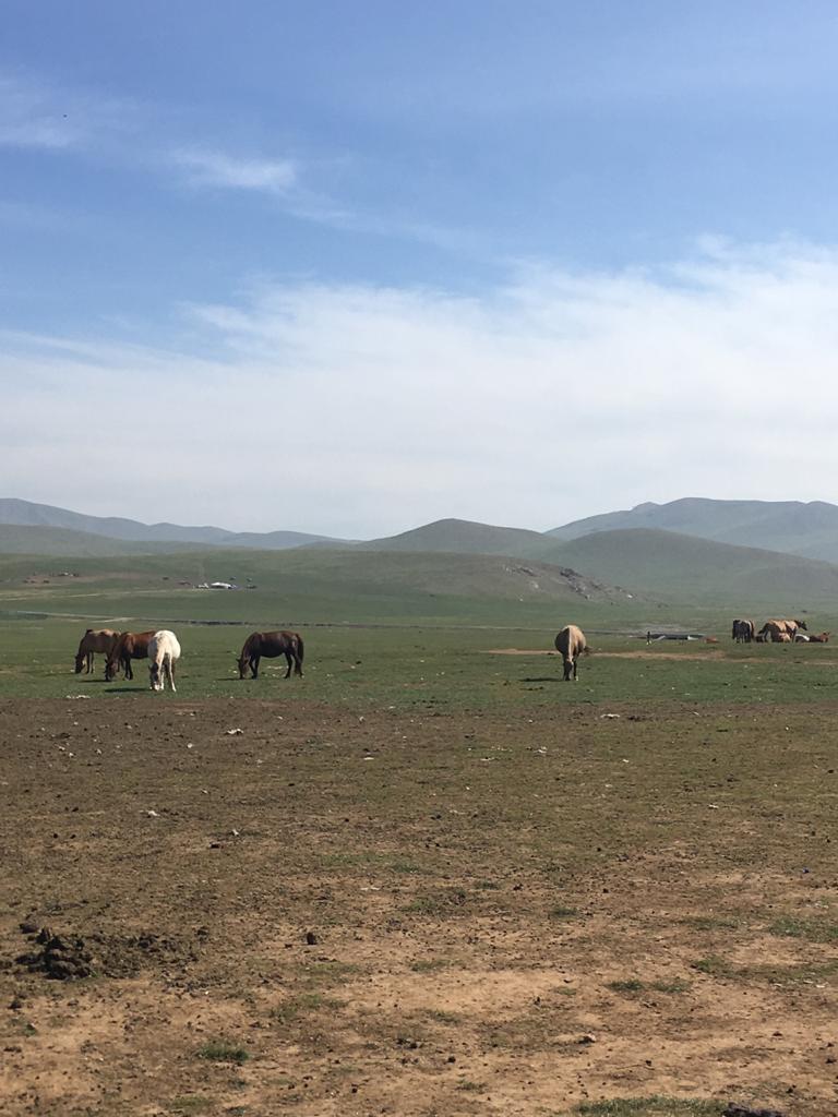 Монгольские лошадки.